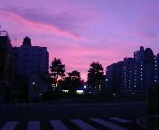 Sora_a